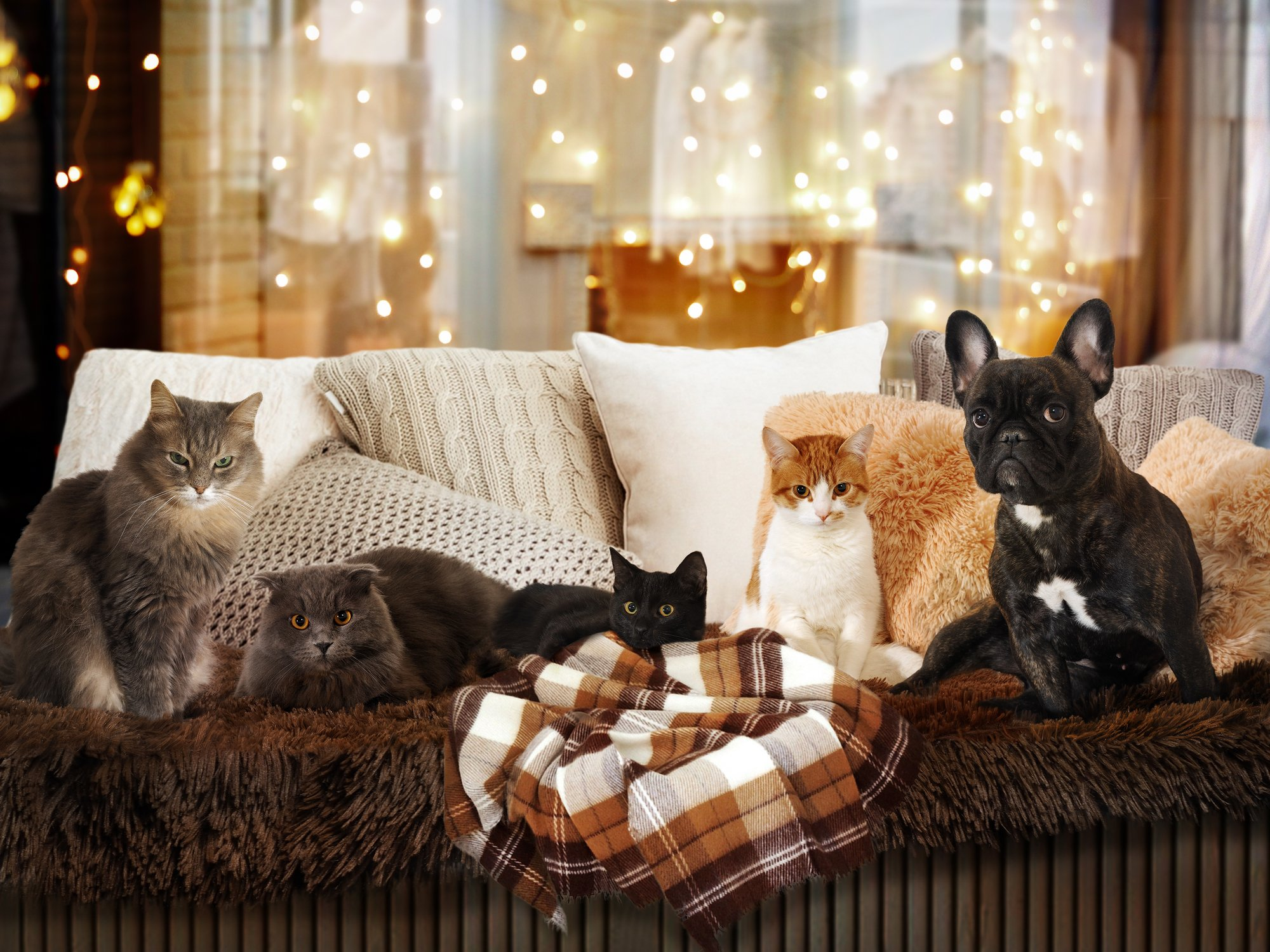 Cats and a dog in a festive interior. Lots of Pets
